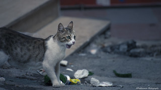 Cats of Istanbul | by A.Cahlenstein Photography