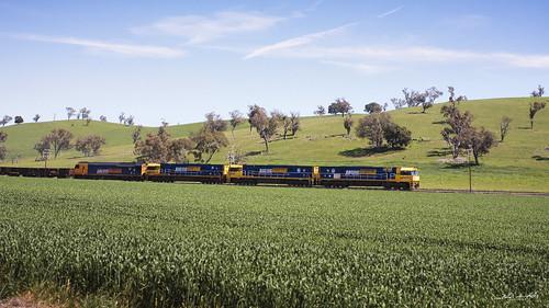 blue sky sun sunlight green grass yellow train daylight country fields wimbledon an8 jindalee anclass nrclass nr67 nr59 nr110