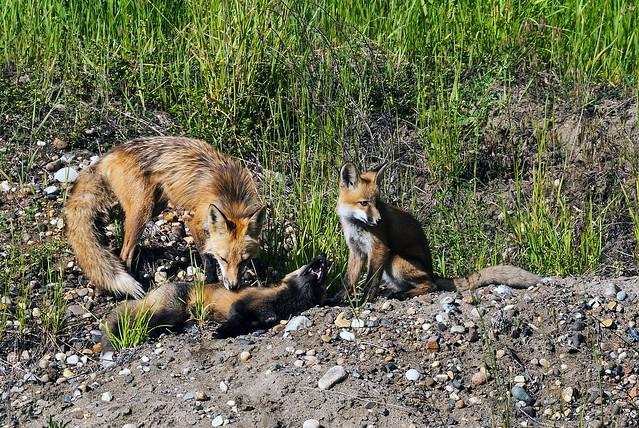 200806-bc-an-fox kits-4014