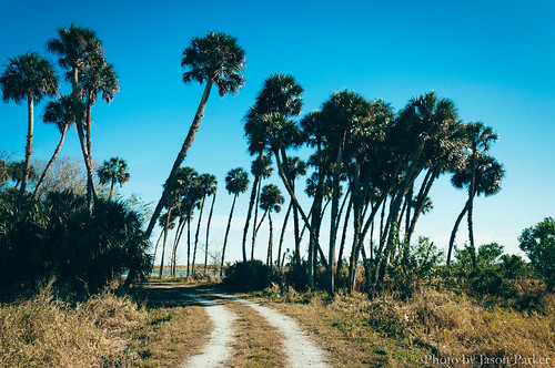 palmtree palmhammock rural country stjohnsriver floodplain brevard river water landscape blue sky bluesky vibrant colorful color classic retro vsco vscofilm seminoleranch hatbillcountypark polarizer nature scenic