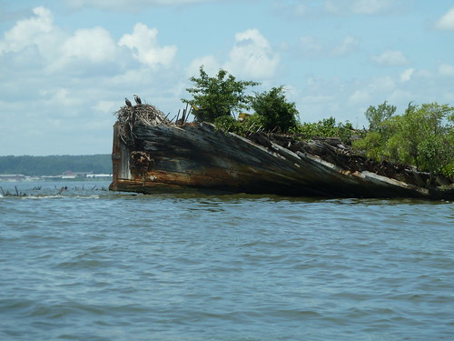 Photo of wooden ship hull covered with plant growth at Mallows Bay
