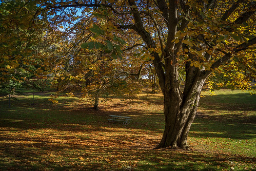 wrightpark tacoma washingtonstate tree fallcolors citypark picnicbench hbm richborder landscape sonya77