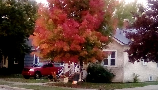 Red truck and tree! - HTT.