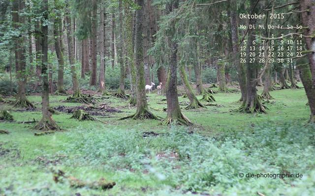 rehe_oktober_kalender_die-photographin