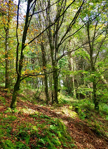 woodland scenery hdr islandwood htmt iphone5 2015onephotoeachday