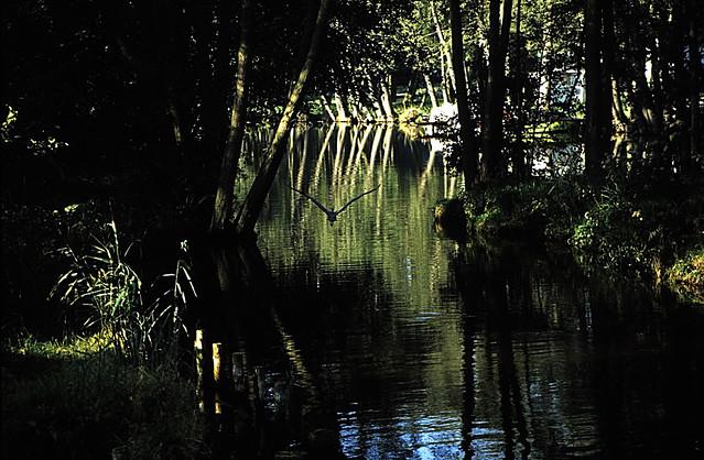 Hausboottour (285)  Jagowkanal