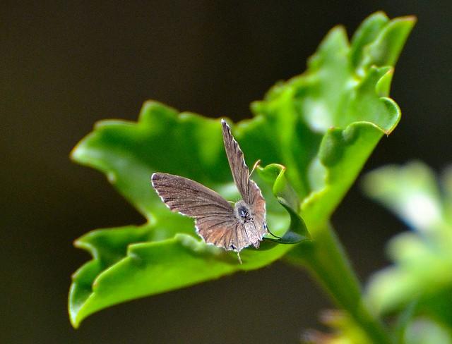 ali nel verde