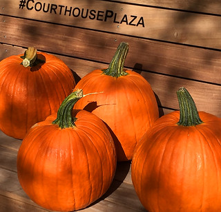 Pumpkins -- Courthouse Plaza Arlington (VA) October 2016   by Ron Cogswell