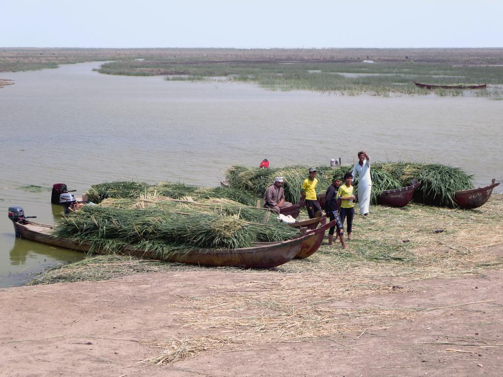 Marsh Arab Canoes   The Marsh Arabs of Iraq employ long wood…   Flickr
