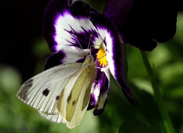 11-15-16 (254) November Butterfly