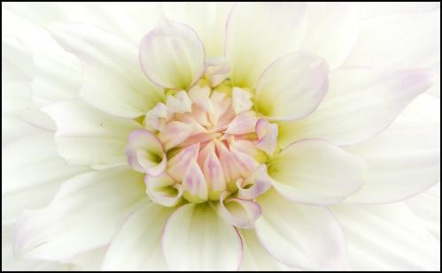 Softness | by SFB579 Namaste