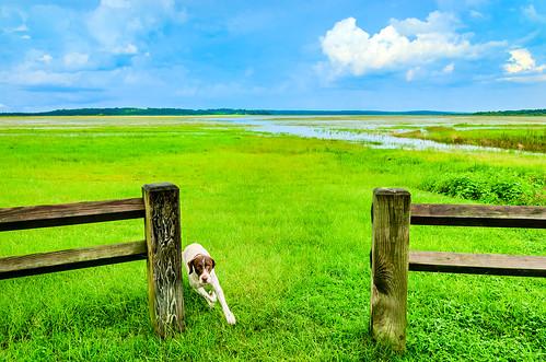 summer usa dog pet green grass landscape outside spring florida horizon scenic sunny canine running run wetlands tallahassee sunsetlanding