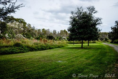 landscape stevepage fujinon oaktrees oldtrees centralflorida fallentrees hangingmoss itail hugetrees osceolacounty stephenpage mirrorlesscamera fujifilmxt1 xf1655mmf28rlmwr