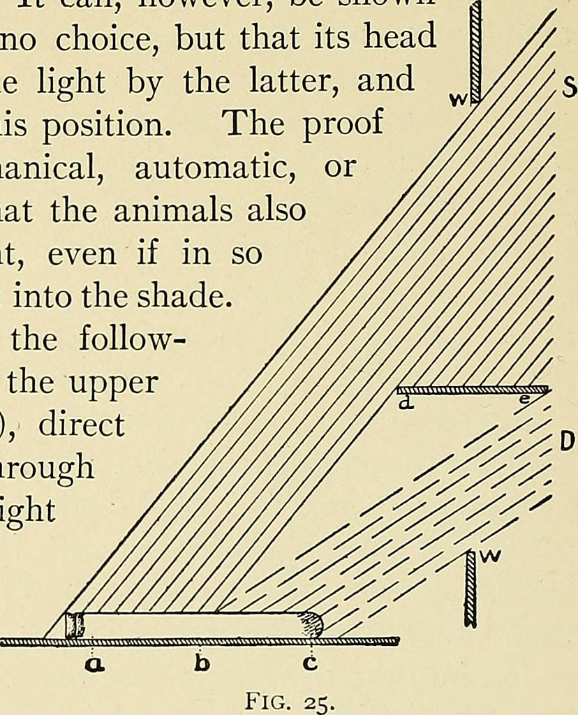 IMAGE FROM PAGE 141 OF THE DYNAMICS OF LIVING MATTER 19 FLICKR