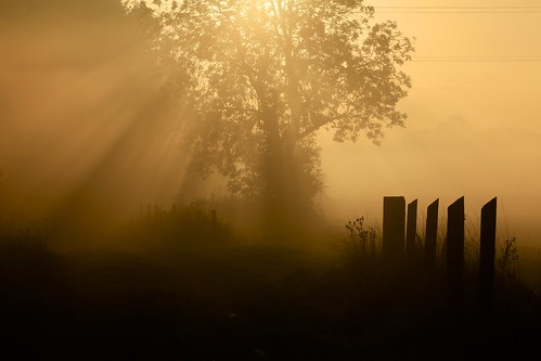 morning sun mist misty dawn alba buckinghamshire country lane rays buckingham countrylane bucks