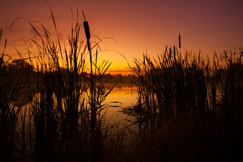 morning autumn sky lake reflection fall reed nature water silhouette wisconsin sunrise landscape photography dawn photo pond october scenery image outdoor picture marsh 2008 canonef1740mmf4lusm goldenhour cattail fitchburg canoneos5d danecounty lorenzemlicka