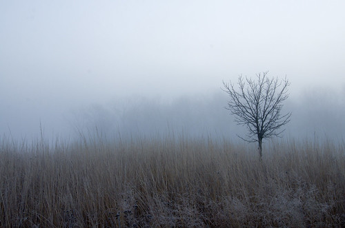 ypsilanti rollinghillspark washtenawcounty fog tree lonetree winter 1000views onethousandviews