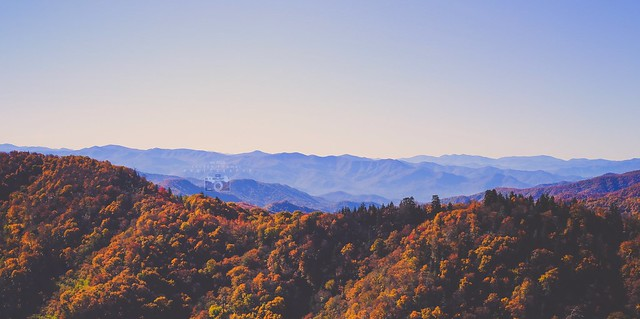 Fall in the Smokies.