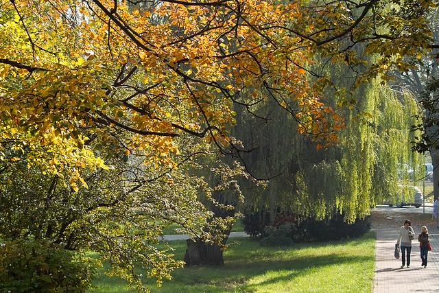 Autumn trees. Poland. Inowrocław