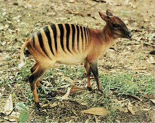 20656398996 e3cc5bdea1 n - 16 животных, которыми природа хотела всех впечатлить, и ей это удалось