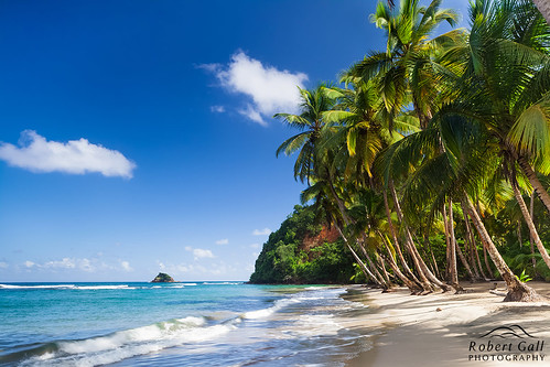 holiday robert beach palms bay paradise postcard urlaub caribbean gall dominica paradies karibik batibou