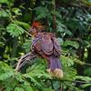 Stinky firebird by Nicolas Rénac