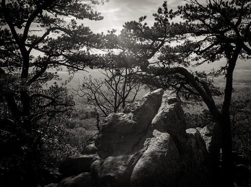 view autumn flare foliage nature sugarloaf fall fujifilm x100s trees rock hiking fuji outdoors naturaleza bw sun trail mountain dickerson maryland unitedstates us