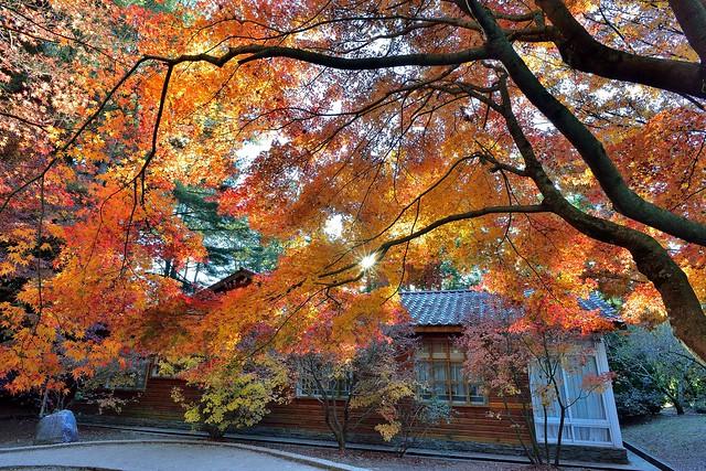 福壽山農場楓葉~Maple