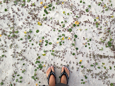 My feet in flipflops standing on sand carpeted with pennywort vines