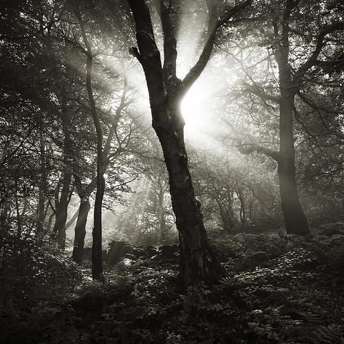 otley tree chevin leeds surpriseview westyorkshire england forestwoods beech birch oak autumn sunrise serene surreal plant