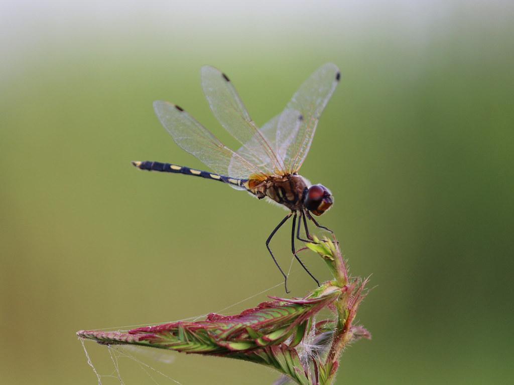 Hitesh | Dragonfly | nau students' photo critic forum | Flickr