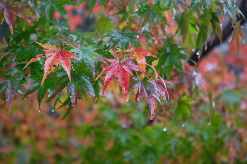 Pluie et automne, la recette pour avoir de belles couleurs