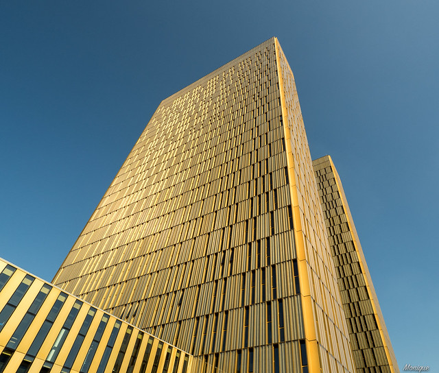 The golden towers