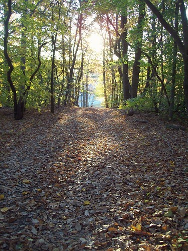 sunrise trail woods