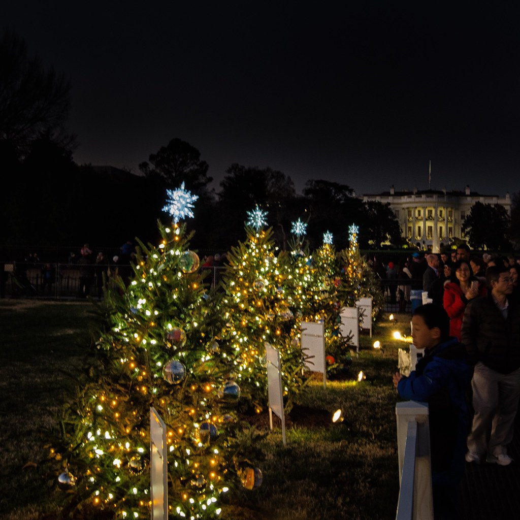 Christmas In Dc.Christmas Trees State Trees That Encircle The National