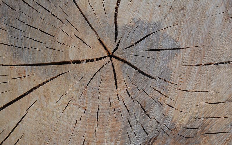 Wood Texture #13