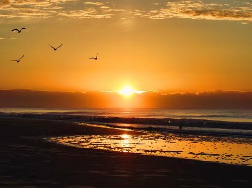 sky birds sunrisesunsetsceniccloudsbeach canonpowershotsx520 oceanseabeachseashellsphotographynature