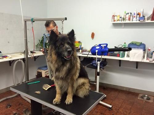 Benito | by wellnessdog