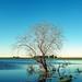 Lakeshore reflection by Daniel Porta