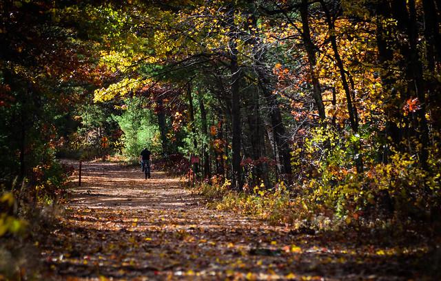 Biking in the woods