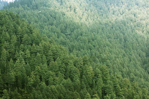 trees pakistan wild plant mountains tree green pine forest canon landscape outdoor hills nationalforest wilderness 50mmf14 50d kpk nomap sufined
