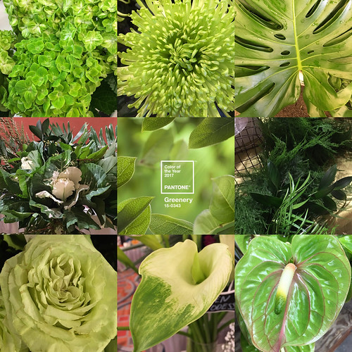 Greenery Collage — Photo Courtesy Sandy Schroeck, AIFD, PFCI, Trend On Design in Eden Prairie, Minnesota, http://www.trendondesign.com/ | by Flower Factor