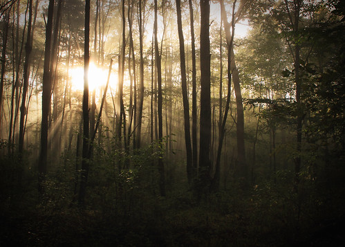 fog sunrise woods pennsylvania pa tidioute pawilds