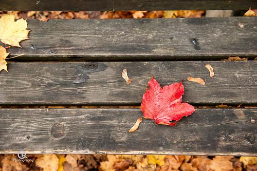 colors leaves landscape bavaria nikon outdoor indiansummer