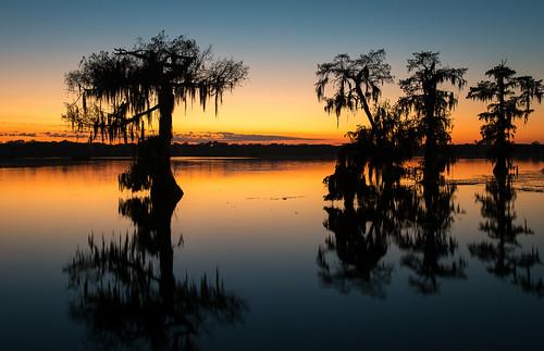 trees sunset usa lake reflection nature wet water landscape reflecting nikon louisiana bayou swamp wetlands cypress thesouth cajun acadia deepsouth lakemartin breauxbridge afs24120mmf4gvr d800e