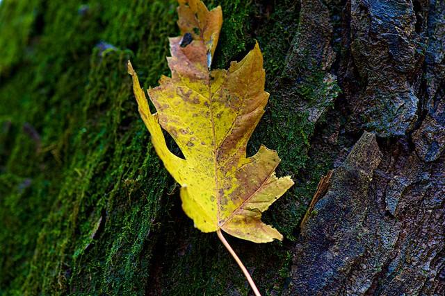 Leaf on Moss