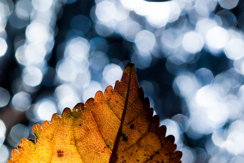 Autumn Bokeh 2