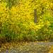 Leavenworth WaterFront Park