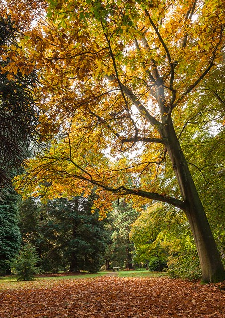 Lynford Arboretum, October 2015