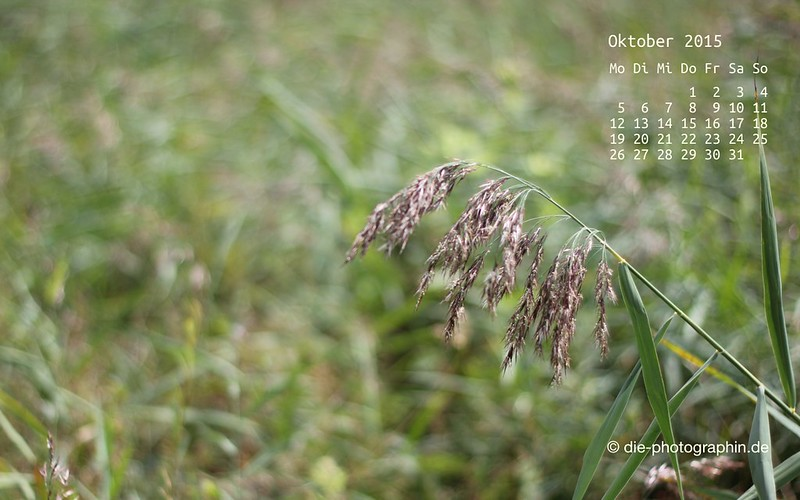 graeser_oktober_kalender_die-photographin